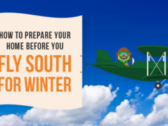 fly south for winter